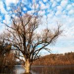 Baum an der Oberilz